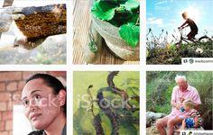 LazingBee Photos NZ (@LazingBeePhotos)   Twitter Kiwiana, Twitter, Photos, Pictures