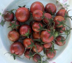 Purple Bumble Bee produces large quantities of 1', round to slightly elongated, purple-black cherry tomatoes with grey-green stripes that contain distinctly pronounced, complex, well-balanced, sweet/acid and smoky flavors.