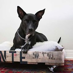 Make a DIY dog bed on wheels out of a salvaged pallet.