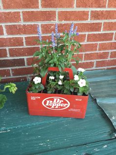 Salvia and vinca make for a great diy mixed container out of this vintage Dr. Dr Pepper, Salvia, Container, Herbs, Stuffed Peppers, Plants, How To Make, Diy, Vintage