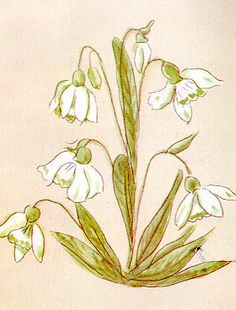 "Alabaster White Snowdrop...  Find more of ""Mary's Flowers"" at http://campus.udayton.edu/mary/resources/flowers.html"