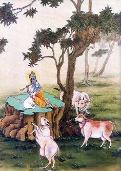 Krishna ~ Cows
