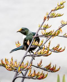 I took this shot of a Tui in the grounds of Parliament, Wellington, New Zealand.  The background is paving, as I shot from a slightly higher position.