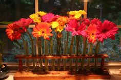 test tube flower arrangement