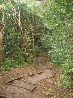 Maunawili Falls Trail, Hawaii