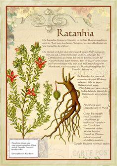 Ratanhia                                                       …