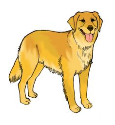 How to Draw a Golden Retriever  Golden retrievers are some of the best family pets around. They are beautiful, playful, gentle dogs who are very loyal to their owners. This tutorial will show you how to draw a realistic Golden Retriever.