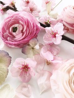 Find images and videos about pink, nature and flowers on We Heart It - the app to get lost in what you love. Pink Flowers, Beautiful Flowers, Spring Photography, Luxury Flowers, Spring Sign, Flower Quotes, Floral Bouquets, Spring Wedding, Flower Art