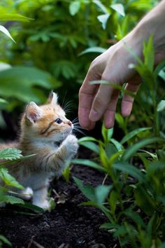 Adorable Cute And Sweet Little Kitty Try To Hand Shake - Click for More...