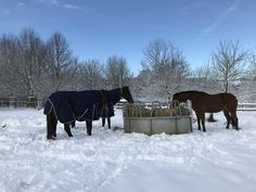 Cow, Horses, Animals, Horses In Snow, Animales, Animaux, Horse, Words, Animal