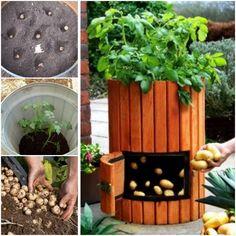 Gardening in Pots A guide book Payhip https://payhip.com/b/OMHK Smashwords https://www.smashwords.com/books/view/710742?ref=nauman098 Kobo https://www.kobo.com/ww/en/ebook/gardening-in-pots Amazon http://amzn.to/2nlOe3S