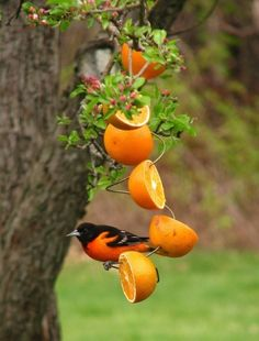 slice oranges in half and pierce a wire through them..simple, beautiful and a nice treat for the birds.