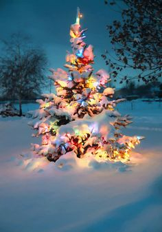 christmas lights in the snow. I love winter+Christmas time! Christmas Time Is Here, Noel Christmas, Merry Little Christmas, Outdoor Christmas, Winter Christmas, Magical Christmas, Merry Christmas Quotes, Christmas Scenes, Thanksgiving Holiday