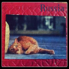 2013-08-02 #Postcard from #Russia (RU-1836428) via #postcrossing #cat #Padgram