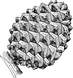 Stone Pine Cone
