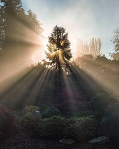 Earth Landscapes - Sunlight beaming through the morning fog created this amazing moment - Kubota Japanese Garden Seattle Washington Landscape Photography Tips, Nature Photography, Travel Photography, Photography Ideas, Zen Pictures, Destinations, Light Beam, Take Better Photos, Best Photographers