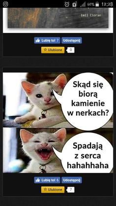 Funny And Gold, Polish Memes, Funny Memes, Jokes, Animals And Pets, Behind The Scenes, Lol, Thoughts, Humor