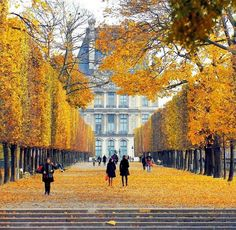 Fall in Tuileries gardens