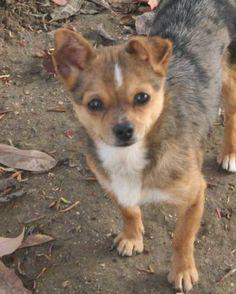 Hund Welpe, Mischling (Mischling, Hündin, 3 Monate