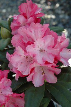 Садовые Растения, Растения Для Посадки У Дома, Семена Цветов, Контейнерные Растения, Затененный Сад, Сады, Красивые Цветы, Цветы Шаблоны, Экзотические Цветы