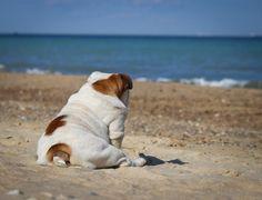 Me at the beach !