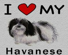 I Love My Havanese Cutting Board - Great For Kitchens by MyHeritageWear. $34.95. Save 22%!