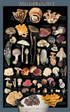 Posters - Edible Forest Mushrooms, Edible Cultivated Mushrooms, Poisonous Mushrooms, Medicinal Mushrooms