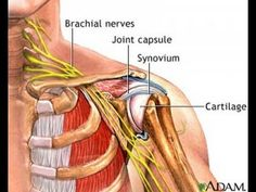 Simple Exercise to Reduce Nerve Pressure in Neck & Bursitis in Shoulder / Dr Mandell - YouTube