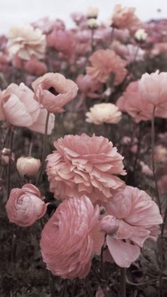 Pink flowers bring pops of cheer to any space. Learn about types of pink flowers and see pink flower images to help you find your perfect plant. My Flower, Pretty In Pink, Pink Flowers, Flower Power, Beautiful Flowers, Flowers Nature, Pink Poppies, Pink Nature, Pink Roses