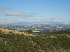 Overview of Calcareous Vineyard in Paso Robles