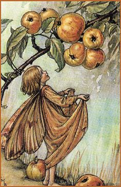 Crabapple fairy, by Cicely Mary Barker