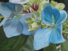 blue hydrangea painting, transparent method of indirect painting, layered approach to oil painting.