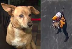 Firefighters Go Beyond The Call Of Duty, Save Drowning Dog In Nail-Biting Rescue