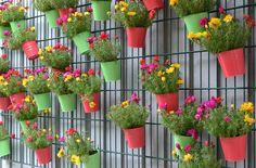 Blooming wall - Ideas for garden Pori Finland Rauno Korhonen