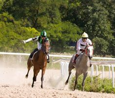 Owning and riding an off the track Thoroughbred can be a rewarding, and sometimes frustrating, experience. In this article from Kentucky Equine Research, Kathleen Crandell, PhD, offers advice on transitioning a healthy Thoroughbred into a new career.