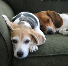 I suspect this is similar to what Scout and Roxie do while I'm at work