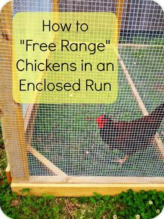 We all know the benefits of free ranging chickens- higher egg nutrition, better chicken health, and lower feed costs just to name a few. Backyard Chicken Coops, Diy Chicken Coop, Chickens Backyard, Chicken Coup, Chicken Garden, Chicken Run Ideas Diy, Small Chicken Coops, Chicken Feeders, Chicken Coop Designs