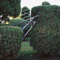 carex garden design by carolyn mullet formowanie iglakw pinterest mullets and gardens