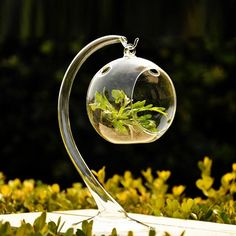 Online Shop Hanging Crystal Glass Plant Flower Vase Pot Hydroponic Container Terrarium Pot Tabletop Home Wedding Decoration Gift|Aliexpress Mobile