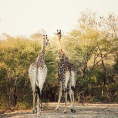 Londolozi Game Reserve in South Africa