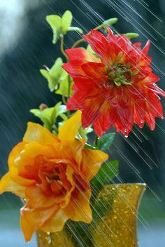 ```Flowers love the Rain```