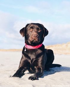 Arizona  Summer is almost here! & our new products too  Shop: fyrah.etsy.com   #fyrahcollection #dog #perro #collar #dogcollar #pinscher #chihuahua #frenchie #husky #fashion #puppy #leash #ilovemydog #shop #style #dogleash #etsy #pet #handmade #love #cute #dogsofinstagram #golden #gold #pug #labrador #pomeranian #bostonterrier #doberman #etsygifts by fyrahcollection