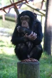 monkey world Rodders