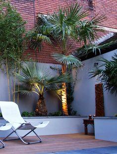 Palm tree in contemporary garden