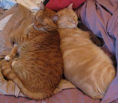 5/14/10 Rupert and Aslan