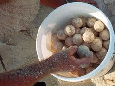 #GEORGIA #SWD #GREEN2STAY Two-time turtle-egg poacher faces 5 years in prison First Coast News 4 p.m. EDT August 28, 2015 (Photo: Courtesy: Florida Times-Union)BRUNSWICK, Ga. -- A Brunswick man faces up to 5 years in prison after he was convicted for the second time Friday of stealing loggerhead sea turtle eggs, according to the United States Attorney's Office.