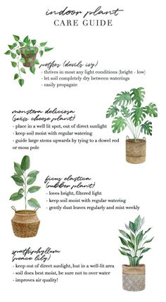 This plant lady is sharing the on keeping indoor plants alive. Inside Plants, Cool Plants, House Plants Decor, Plant Decor, Indoor Garden, Garden Plants, Garden Shrubs, Cactus Plants, Best Plants For Bedroom