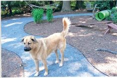 Crushed stone dust for pathways ... NOVADog Blog » Blog Archive » Building A Dog-Friendly Back Yard