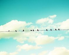 Oh that blue... :: birds on a wire photography by mylittlepixels