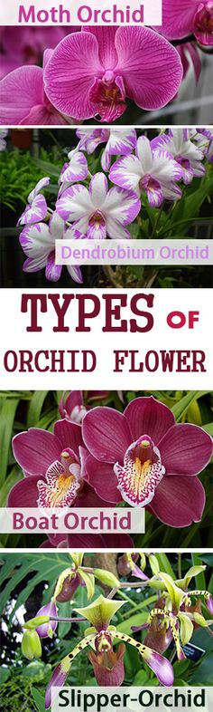 #Orchid #flowers are one of the unique flower that last for a longer time than other flowers.